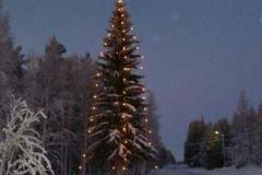 Julgranen i Jämtöavan